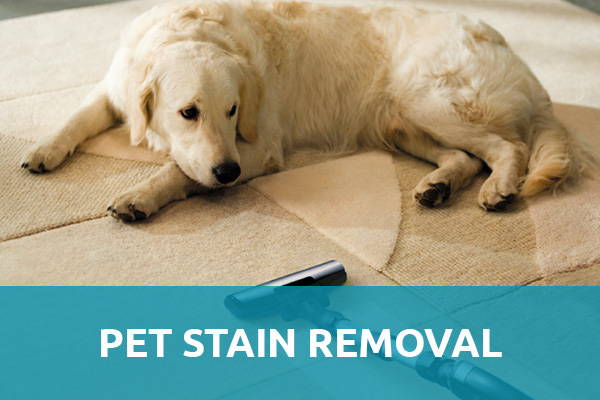 "A white dog lying down on a carpet made up of cotton along with the carpet cleaner and a header title that say ""Pet Stain Removal"" and that is one of the services of carpet cleaning Albuquerque."